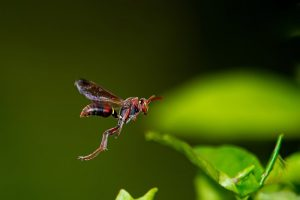 paper wasp pest control