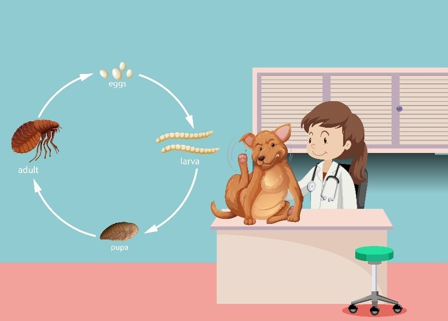 Fleas Attack on Pets