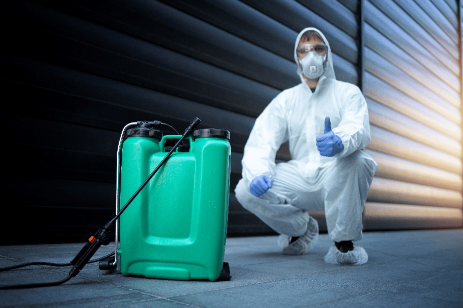 Why Termite Inspection is Necessary?