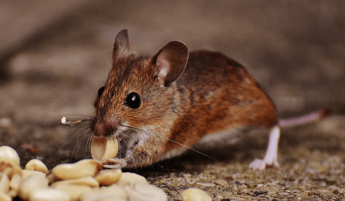 Tips to Get Rid of Pests from Your Place